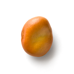 rdc-bean-circle-6